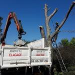 abattage arbre gard - entreprise abattage arbre abatout