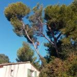 taille arbre dangereux nîmes - arboriste nîmes - entreprise abatout