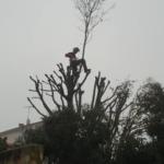 élagage caissargues - élagueur grimpeur abatout