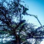 élagueur grimpeur caissargues - entreprise élagage nîmes abatout
